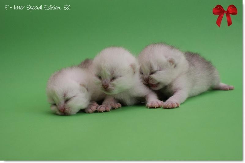 84fc5e7d09 ... aby sa radšej liahli z vajíčka  -) Mačiatka budú na predaj